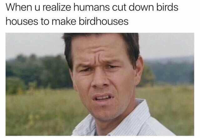 Humans cut down birds houses to make birdhouses - meme