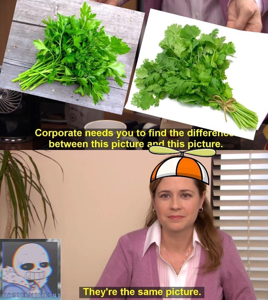 Es perejil o cilantro ya no sé cuál es - meme