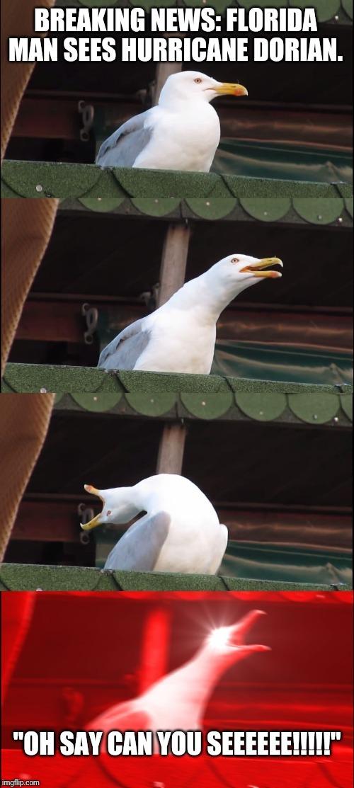 Birb - meme