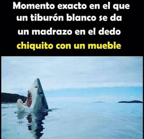 No preguntes sobre el dedo si se trata de un tiburon. - meme