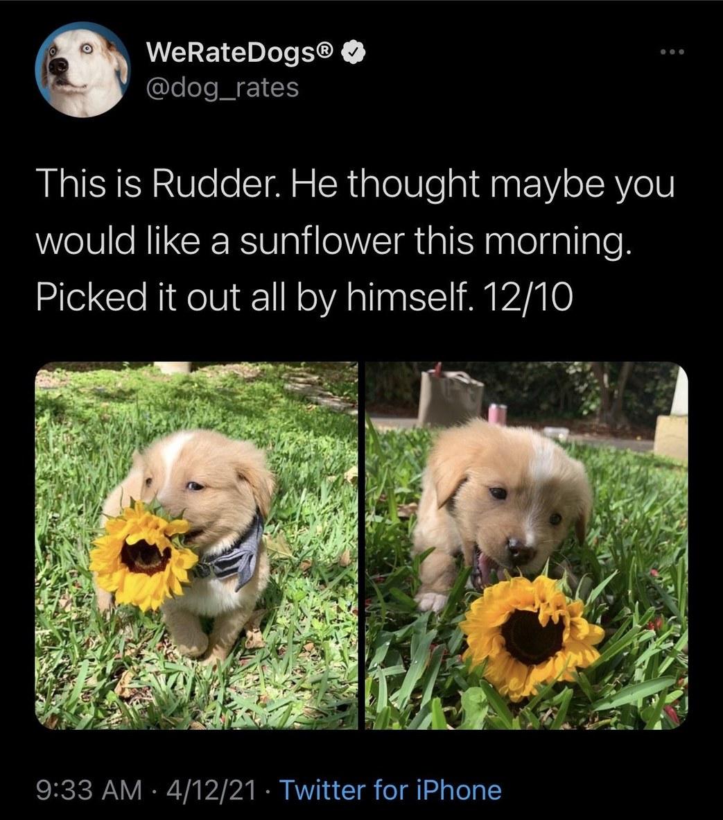 Rudder - meme