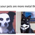 When your pets are more metal than you