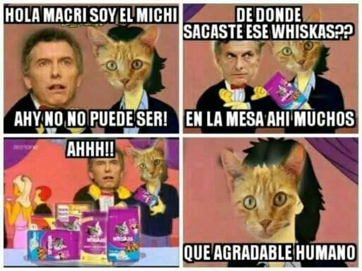 El Michi and the Cat - meme