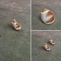 Así es como nacen los gatos