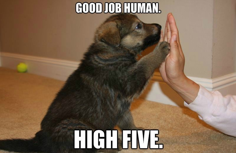 dog hi five - meme