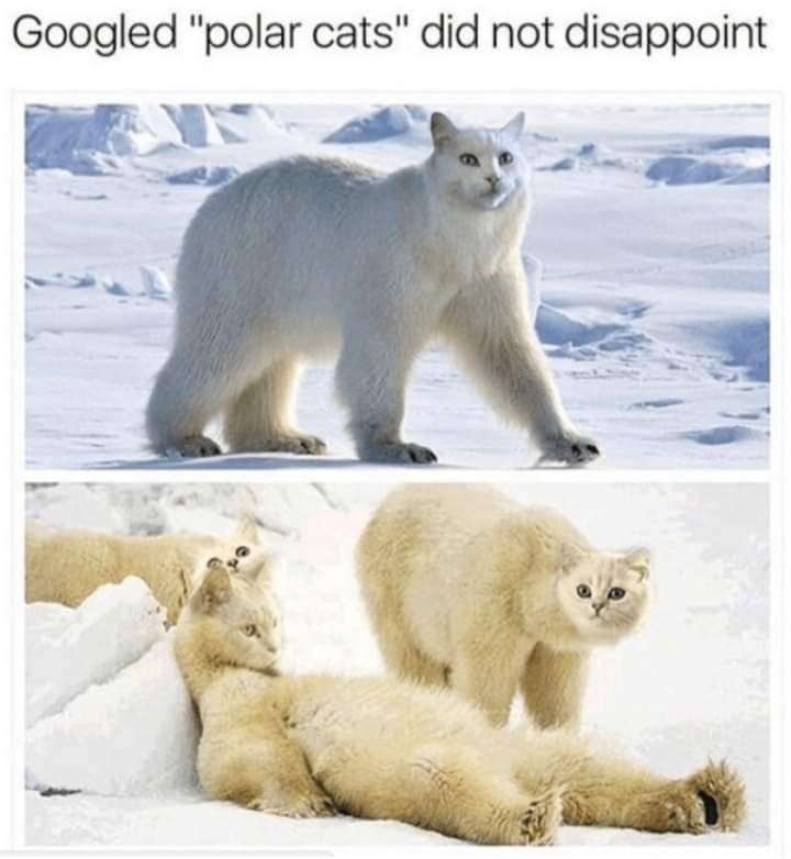 """Finish the sentence """"Polar Cats? More like...."""" - meme"""
