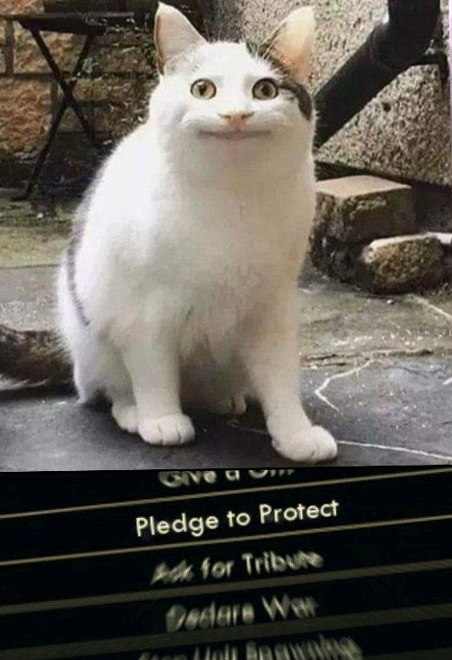 Protecc - meme