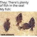 PlentyOfFish.com
