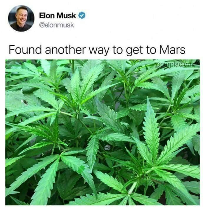 Musk on drugs - meme