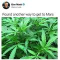 Musk on drugs