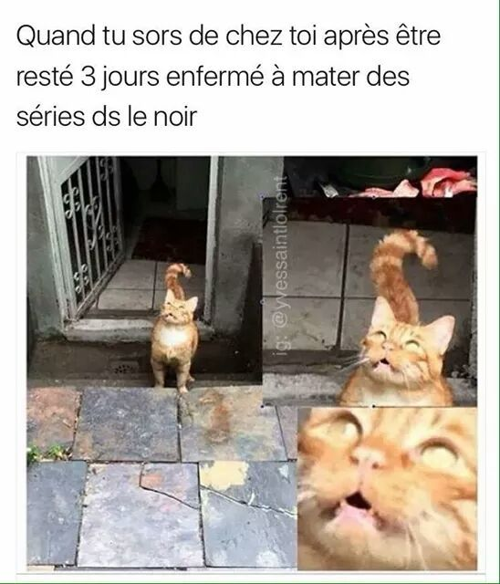 40 - meme