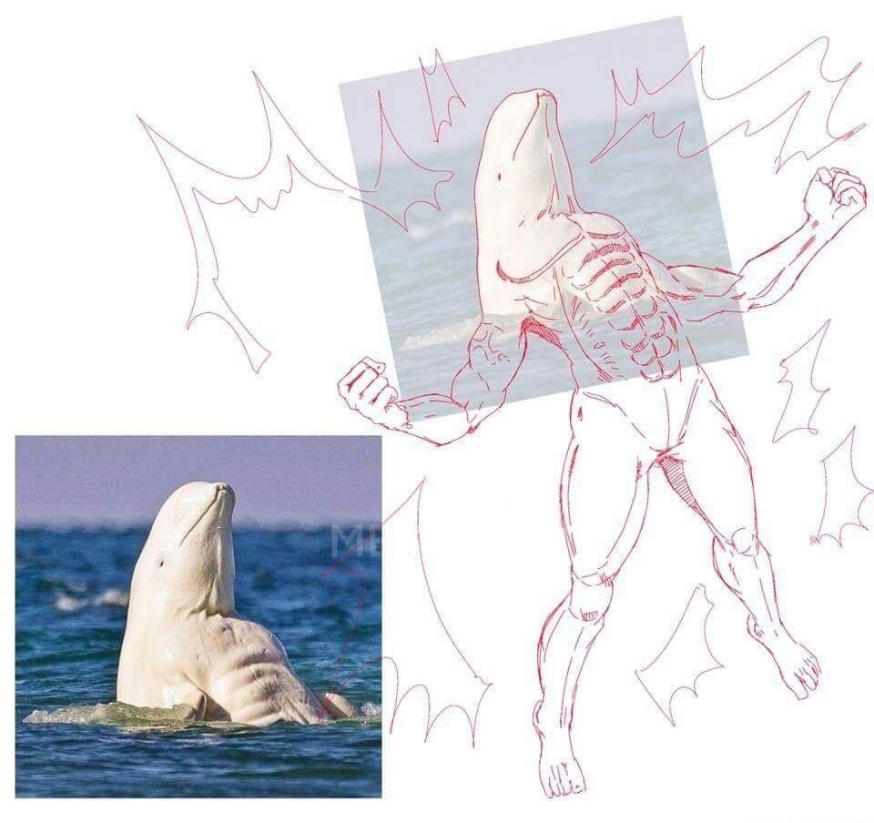 Beluga monstro - meme