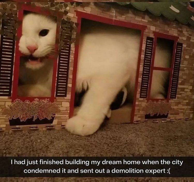 giant cat - meme