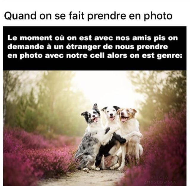 photo - meme