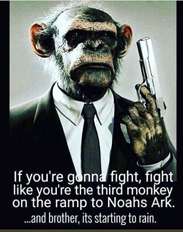 Fight monkey, fight! - meme