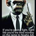 Fight monkey, fight!