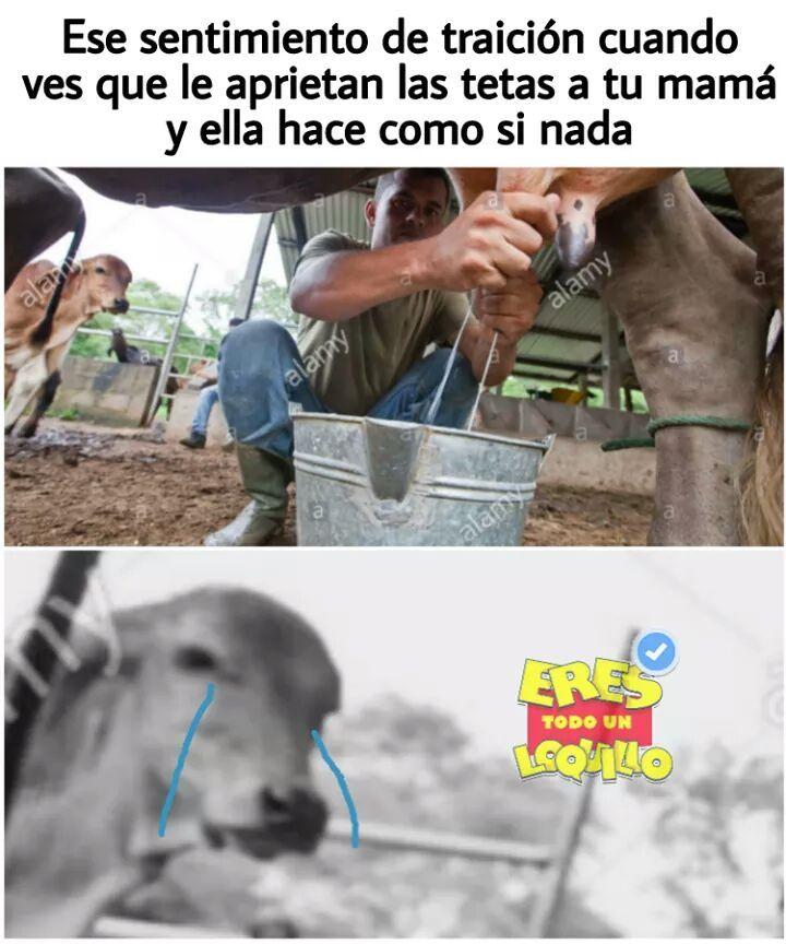 Lechita - meme
