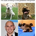 Comment pitbull if you see this