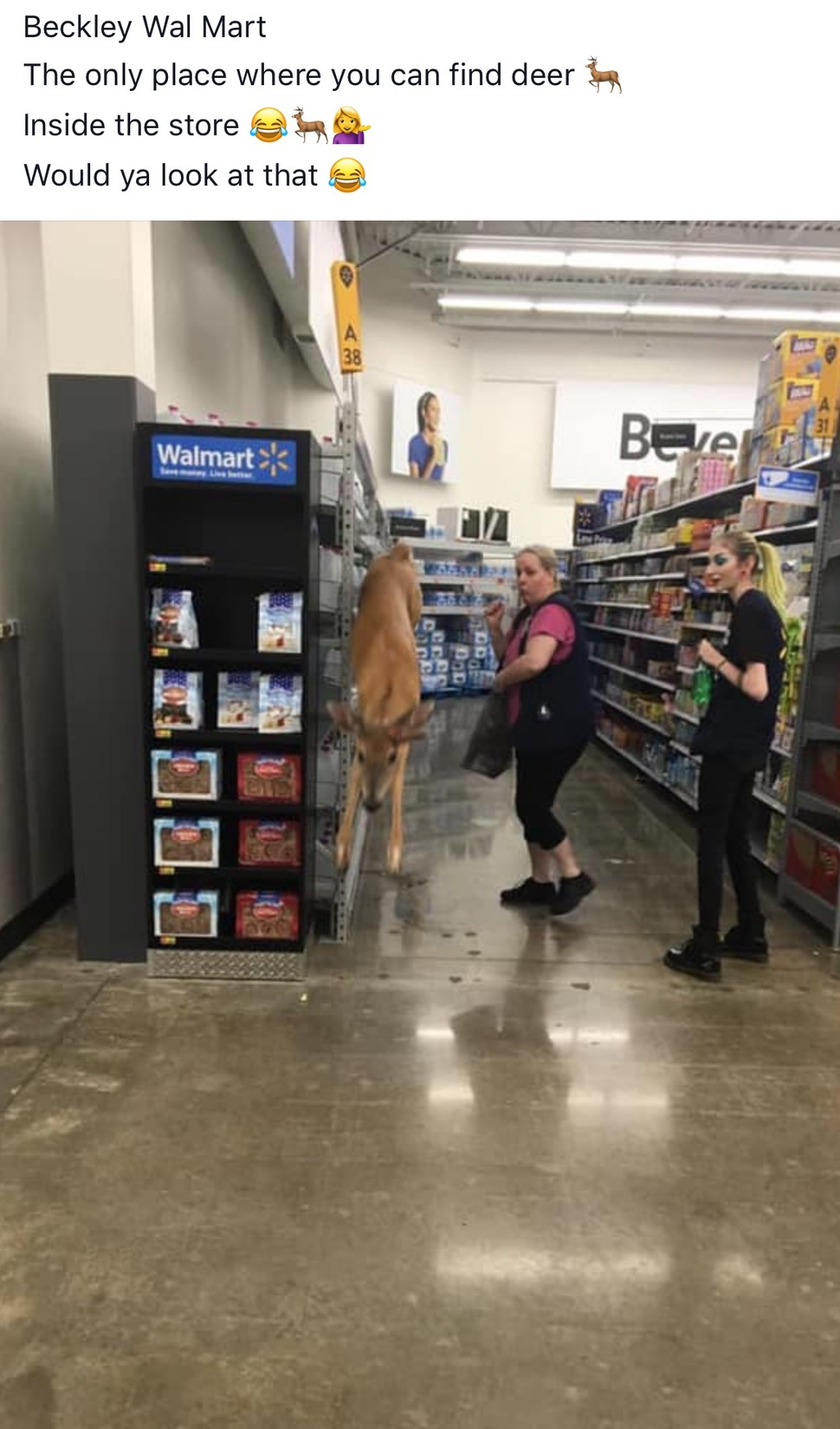 deer in my hometown Walmart - meme