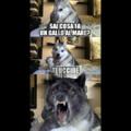 Cane cattivo