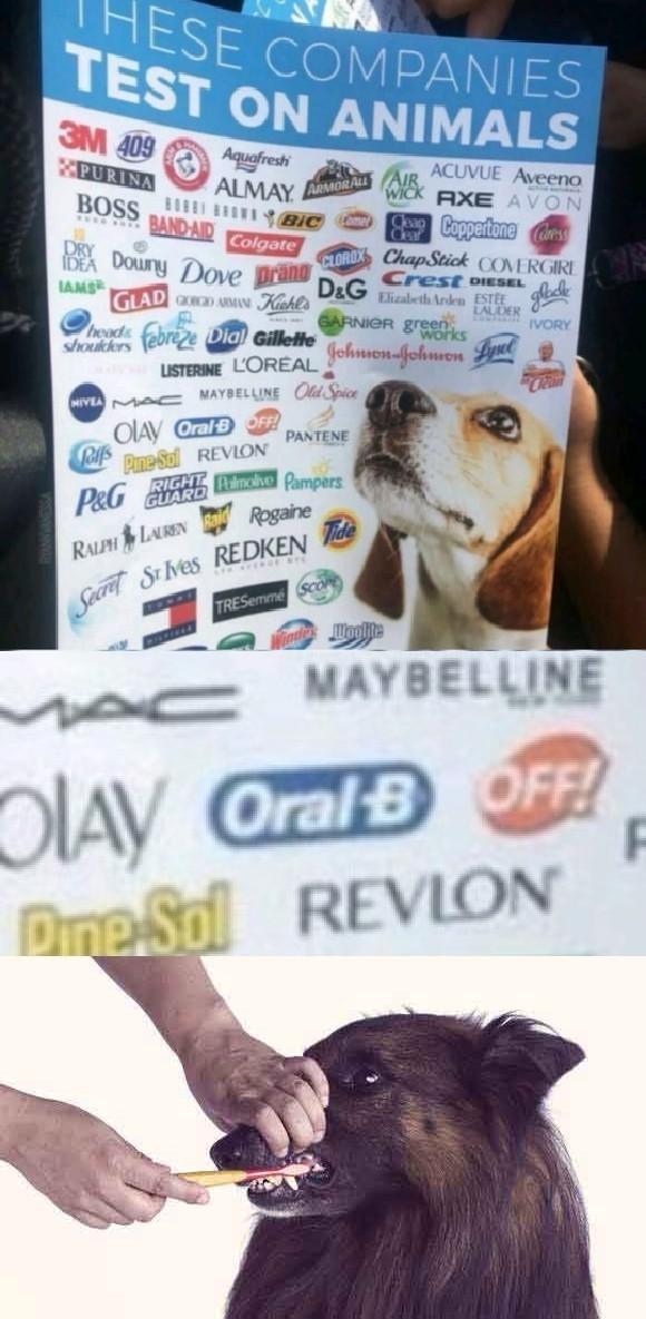 Doggo does a brush - meme