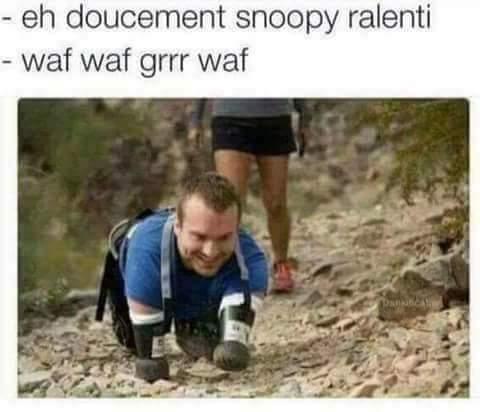 Ouaf - meme
