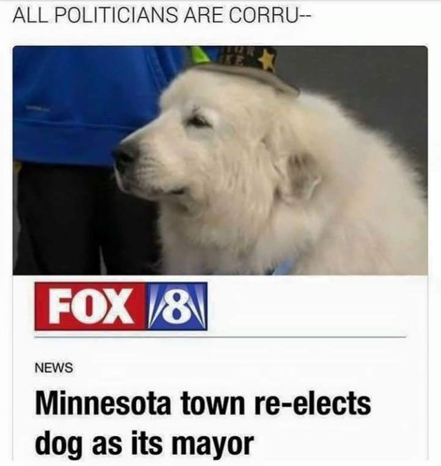 Minnesota town re-elects dog as its mayor - meme