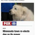 Minnesota town re-elects dog as its mayor