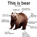 bear is good