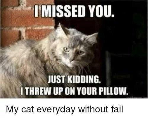 Cats are assholes, but I love them - meme