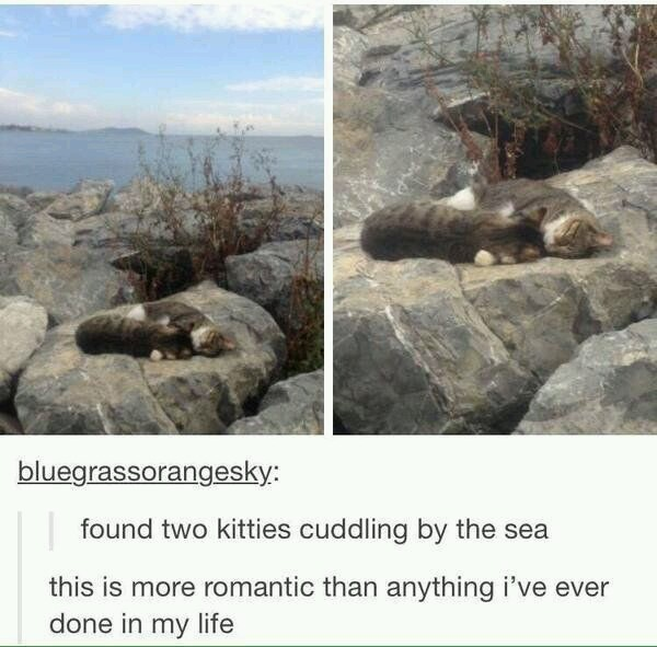 Cuddling cats by the sea - meme