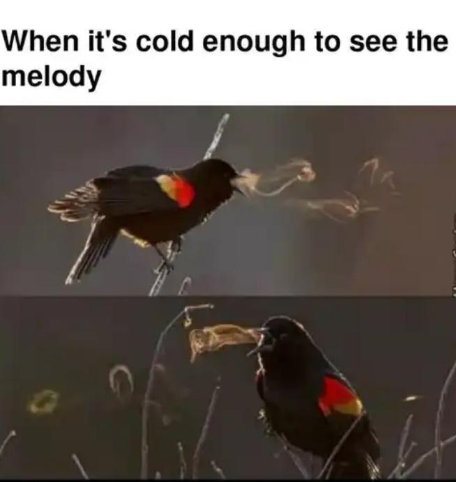 Shit post - meme