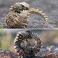 Say hello to a real dragon boi