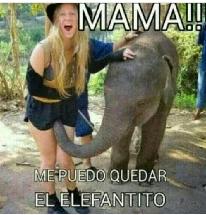 Elefantito - meme