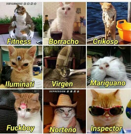 Gatos Gatos Gatooossss - meme