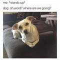 Doggo wants to walk