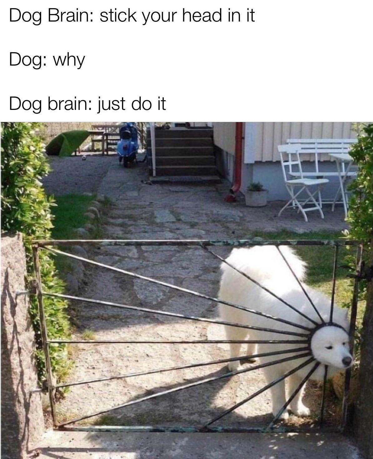 Dog : i am the sunshine of your life - meme