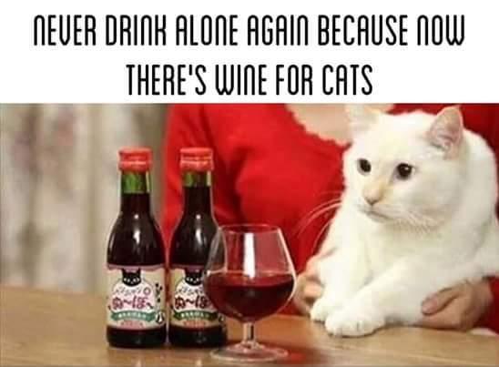 Crazy cat lady 9000 - meme