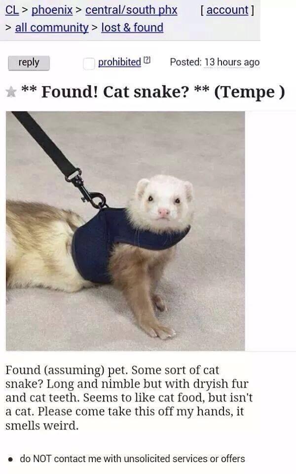 catdog - meme