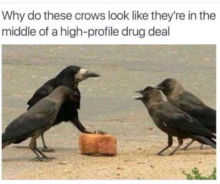 DRUG DEALER BIRDS!#$?? - meme