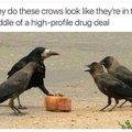 DRUG DEALER BIRDS!#$??