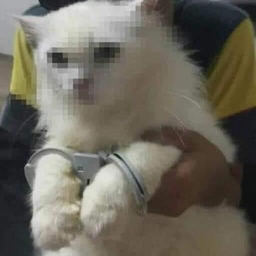 Arrest - meme