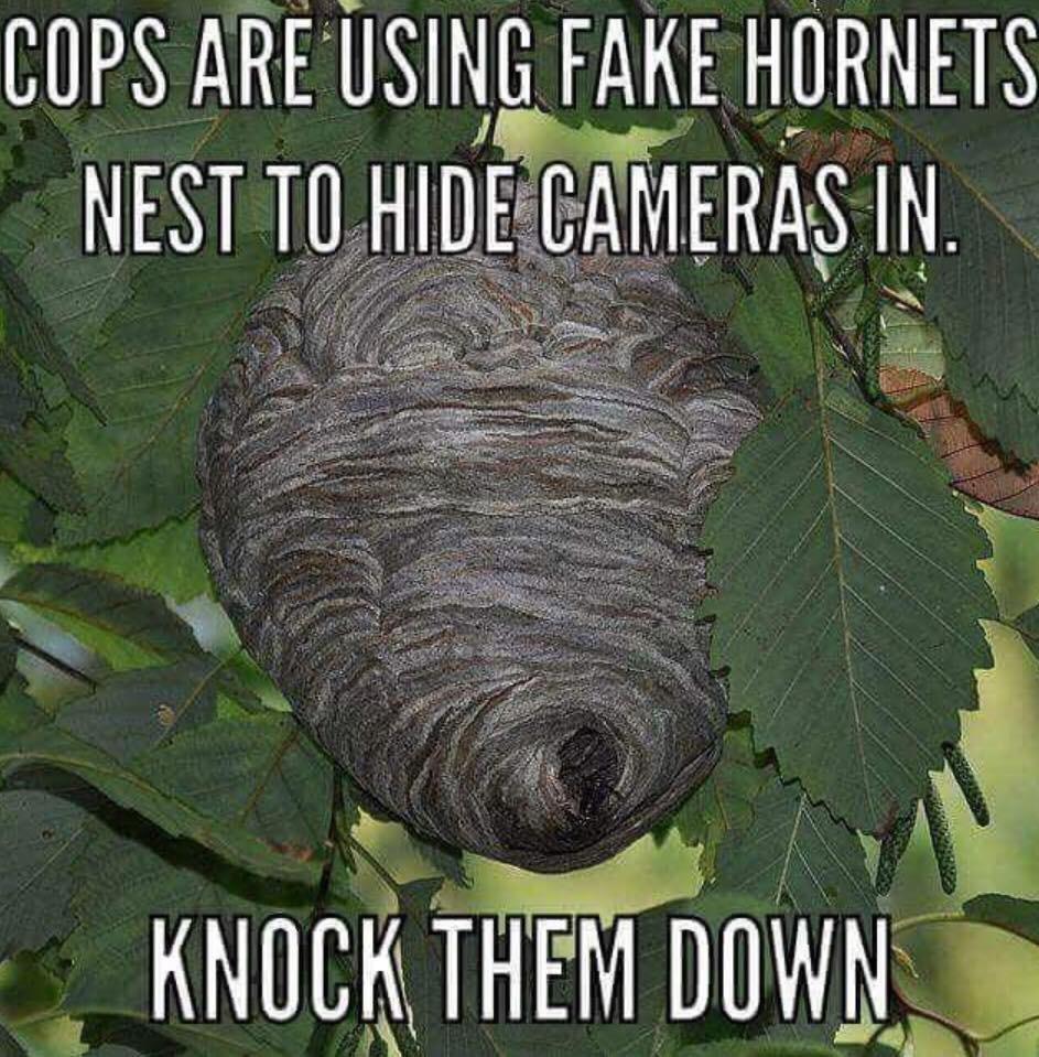 KNOCK THEM ALL DOWN - meme