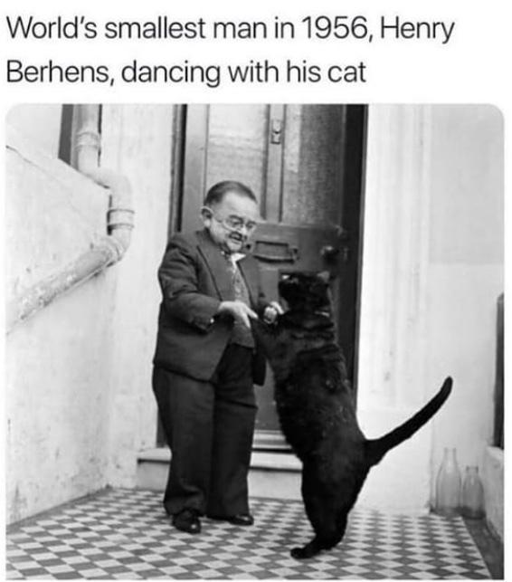 it's just a big cat - meme