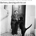 it's just a big cat