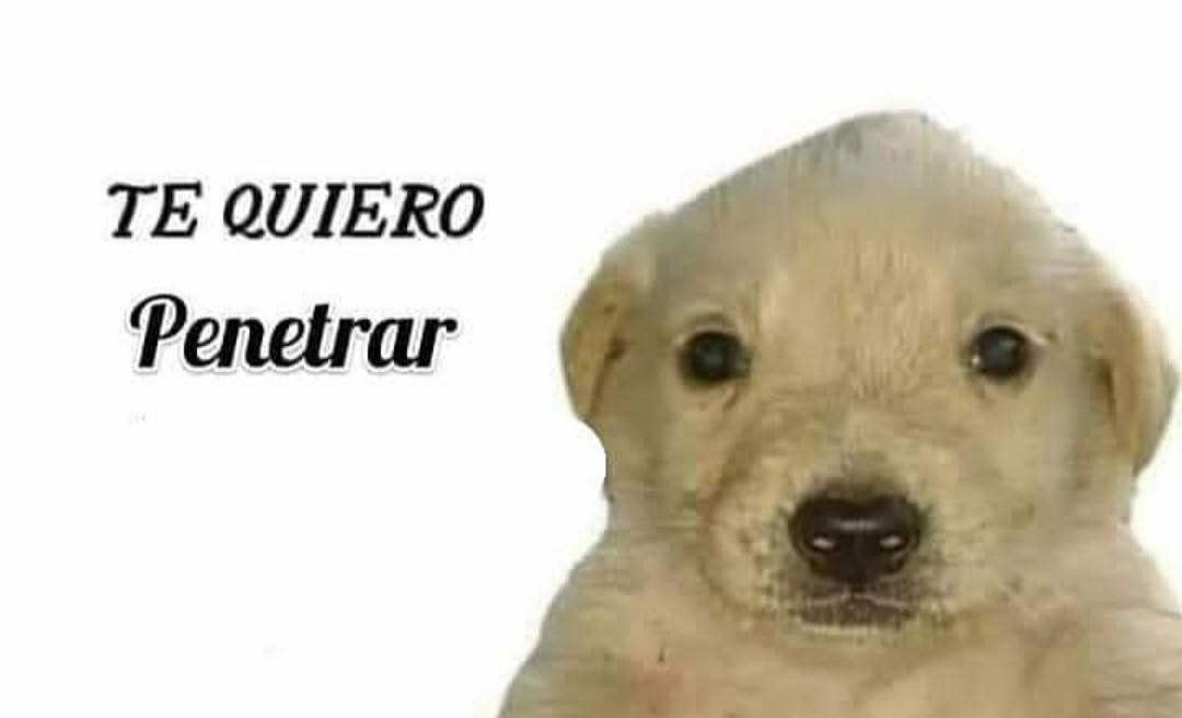 Perro - meme