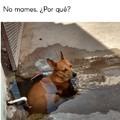 Un perrito adelantado a su época