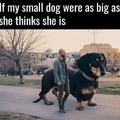 little dog attitude