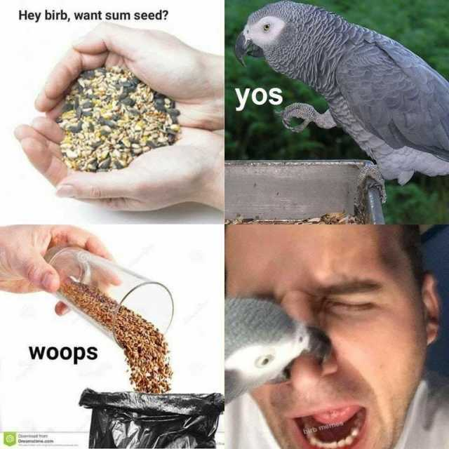 Birbs r mean - meme