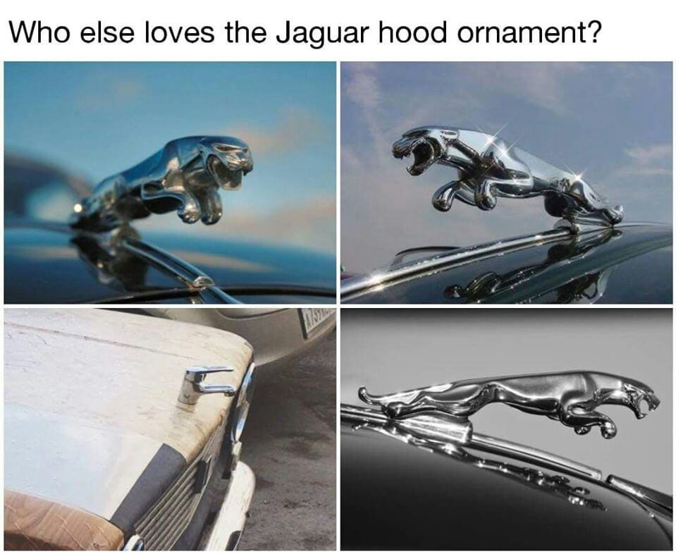 Jaguar - meme
